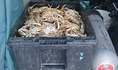 Secuestro cangrejos