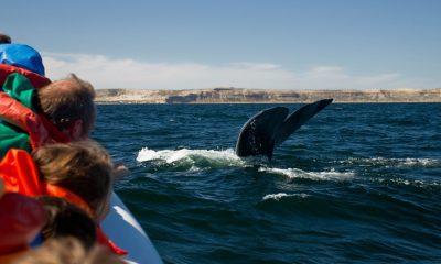 Avistaje de ballenas nominado a un premio internacional