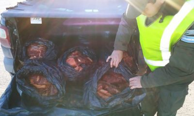 Neuquén: secuestraron casi 300 kilos de carne