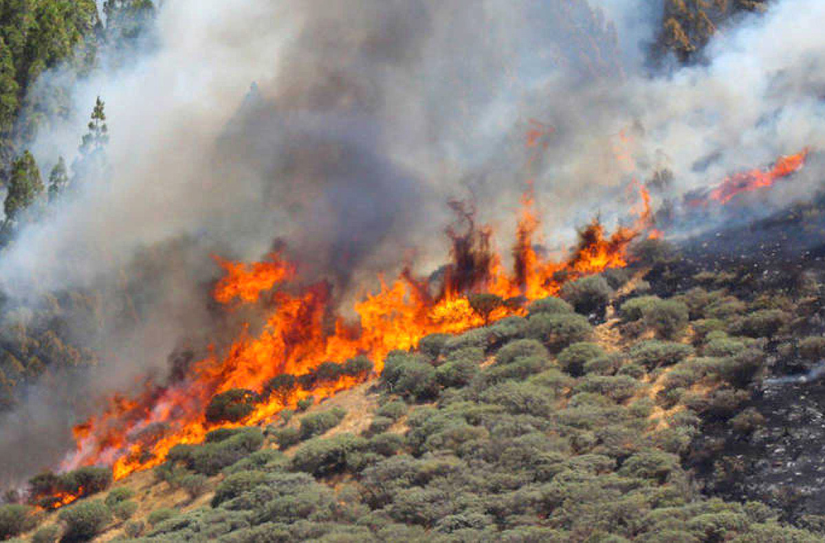 Incendio Gran Canaria