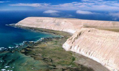 Aumentó la presencia de lobos y ballenas en el ANP Punta Marqués