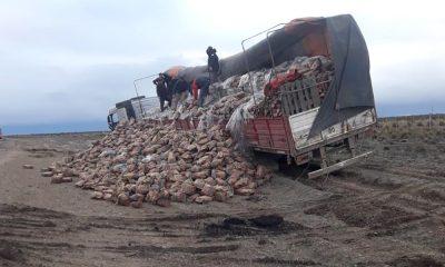 Un camión con leña y carbón despistó en la Ruta 3