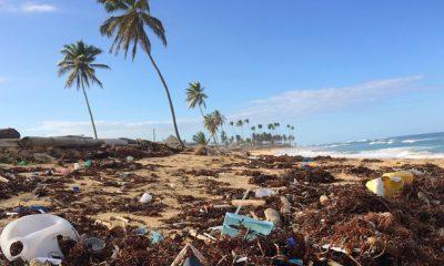 Una web de porno estrena una película para limpiar los océanos