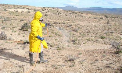 Tareas de monitoreo para prevenir el avance de la tucura