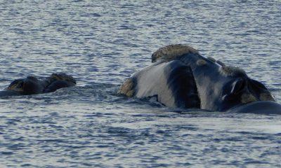El Doradillo la vidriera de las ballenas