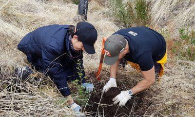 Plantan más de 4 mil árboles en el PN Los Alerces