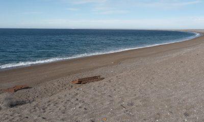 Por marea roja, se vedó la extracción de moluscos en Puerto Lobos