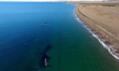 Ballenas de Península en Brasil