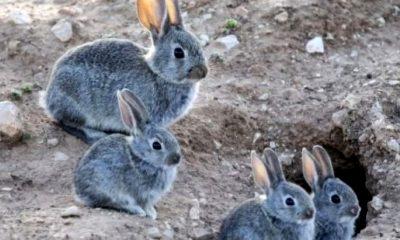 Conejos Ushuaia juez prohíbe fumigación