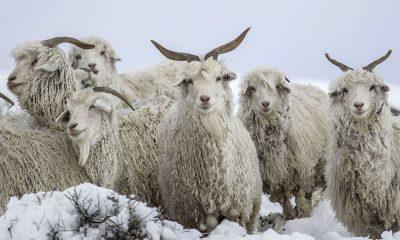 Consejo Nacional de Emergencia Agropecuaria nevadas en la Patagonia