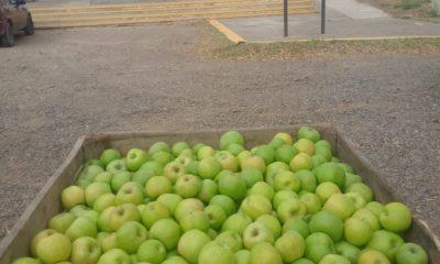 Chacareros del Valle de Río Negro donaron 6.000 kilos fruta a escuelas de Valcheta