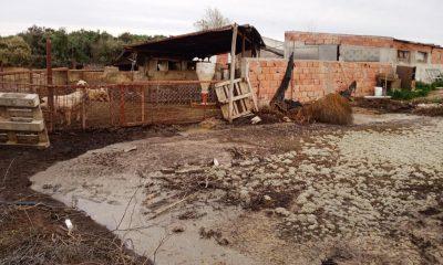 Ambiente inspeccionó un establecimiento de cría de cerdos de Rawson