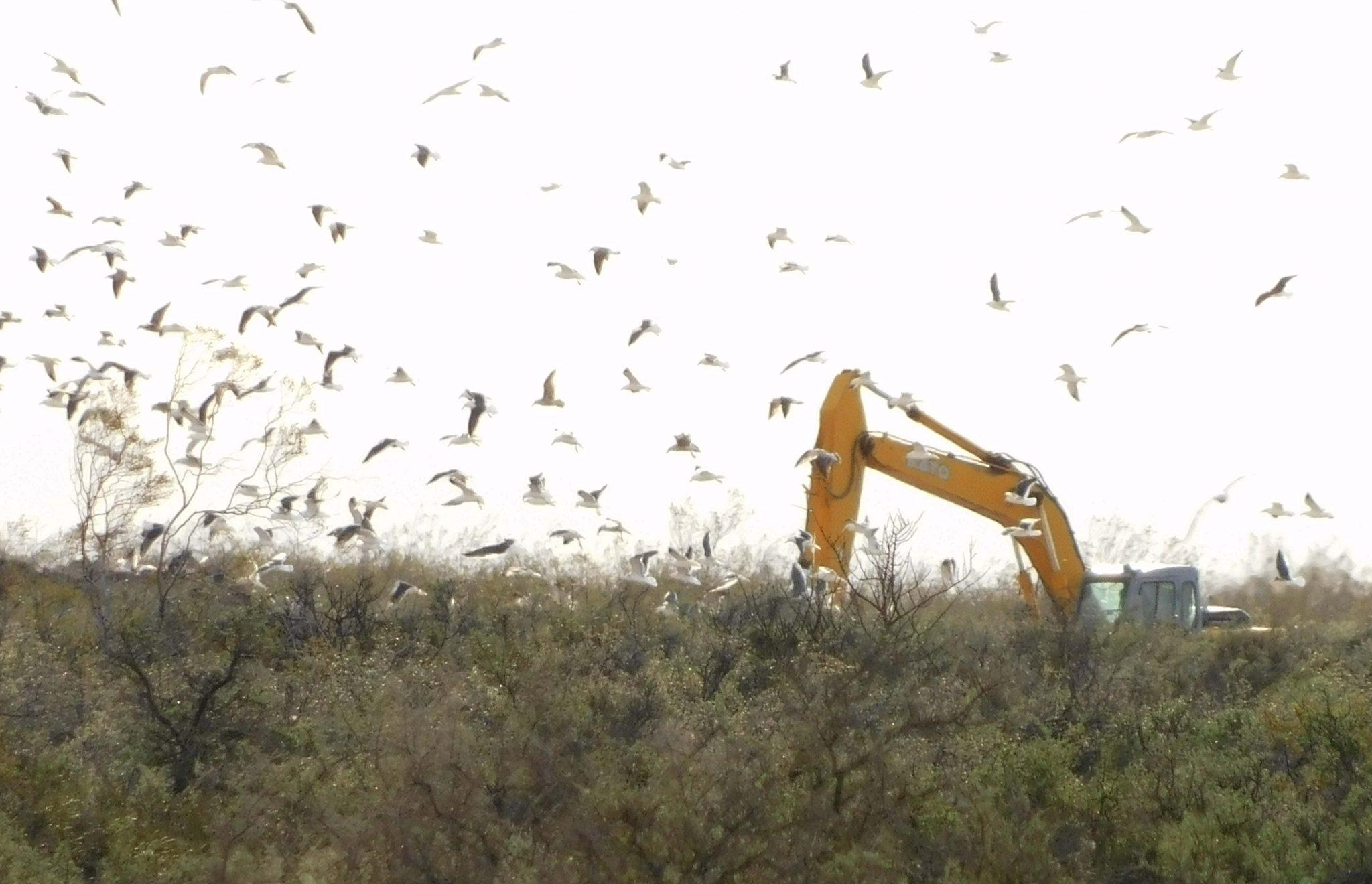 Sigue el volcado de residuos de Langostinos a la vera de la Ruta 1