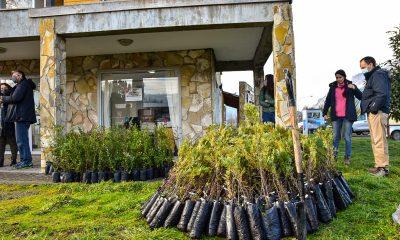 Plan para reforestar las áreas afectadas en la Comarca Andina