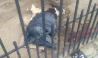 Perro apuñalado de muerte por el vecino