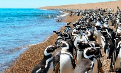 Pingüinos Punta Tombo