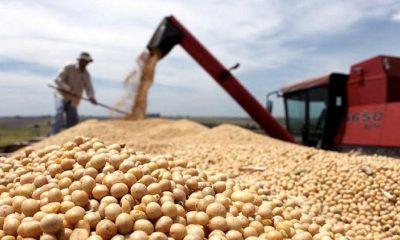 Exportaciones sojeras argentinas